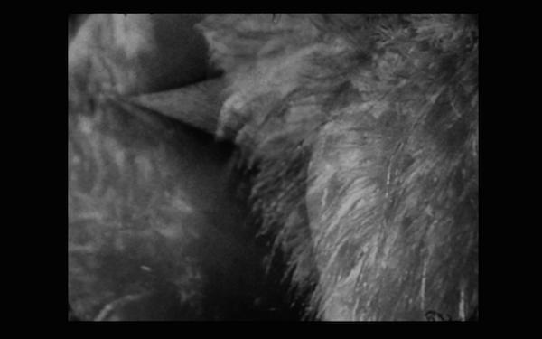 Fur dissolving into Lap